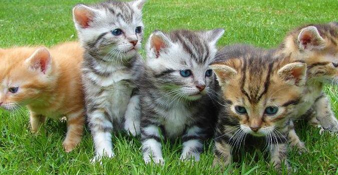 科学表明看可爱的动物对您的健康有益