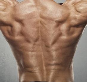 通过有氧运动和无氧运动锻炼背阔肌