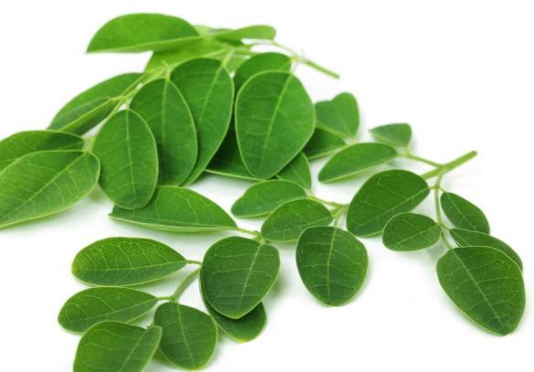 一些苏丹药用植物显示出从水中去除重金属的潜力