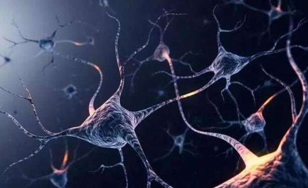 恒达登录注册研究结果削弱了大小等于神经连接强度的概念