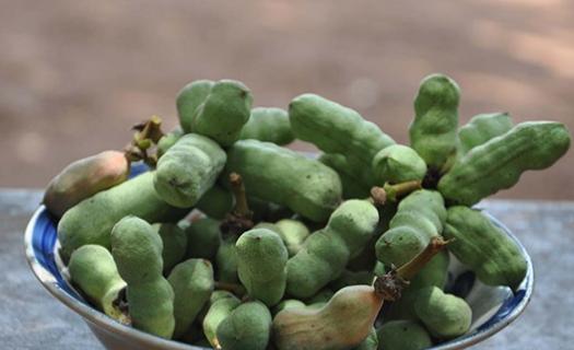 科学家分析了辣椒果树的抗氧化特性