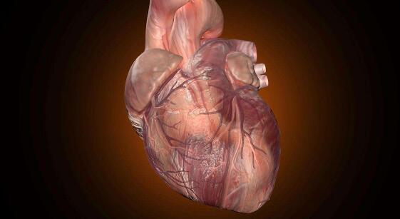 即使是轻微的心脏缺陷也与成年后的长期问题相关