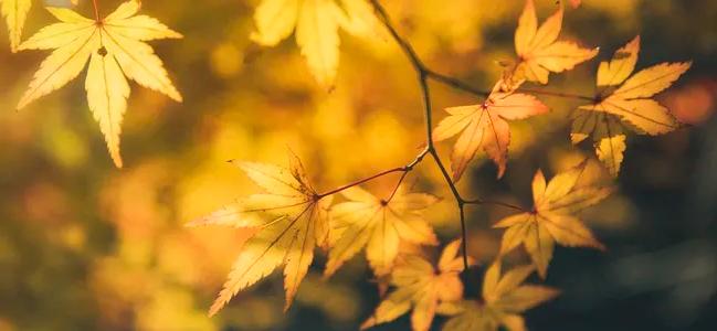 立秋之后气温开始降低是人们发病较多的时节