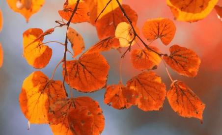 秋季养生保健必须遵循养收的原则