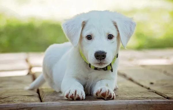 如何让宠物快乐健康