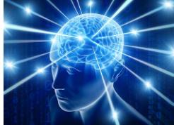 减肥是与大脑中某种神经网络的连接模式有关
