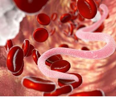 蠕虫或寄生蠕虫及其与宿主免疫系统的相互作用