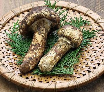 松茸一向被人们誉为高级的营养滋补品营养含量非常的丰富
