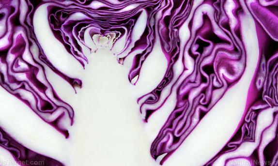 恒达登录注册在饮食中添加紫甘蓝的8个充分理由