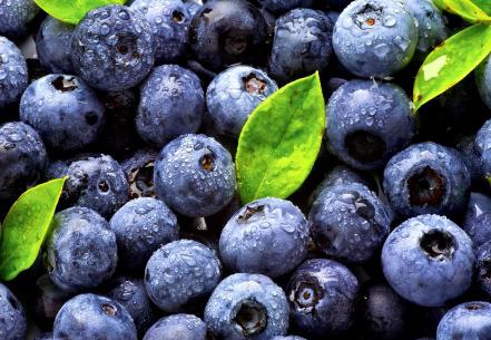 在饮食中添加蓝莓以改善大脑功能和记忆