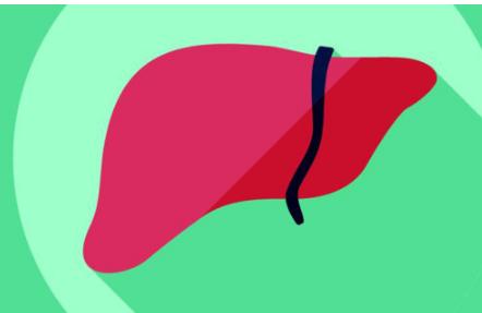 养肝过程中如何做肝是人体的重要器官