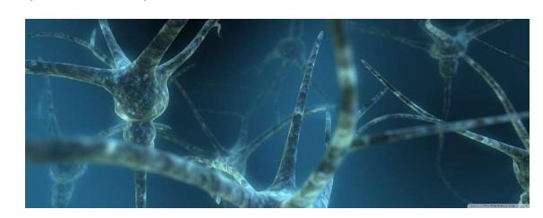 科学研究确定离子通道成分是神经元连接的关键调节剂