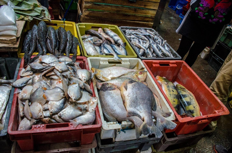 水生生物多样性是营养丰富饮食的关键