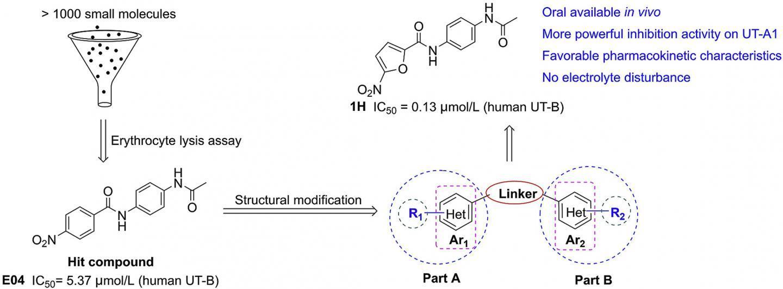 新型二芳基酰胺可以作为靶向尿素转运蛋白的口服利尿剂