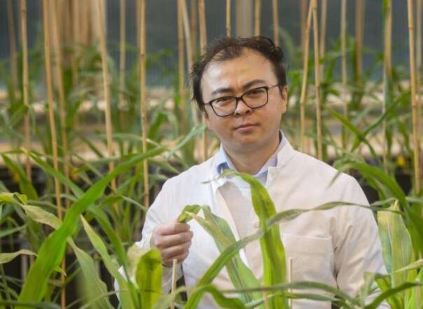 细菌帮助植物更好地生长