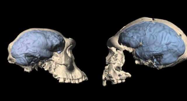 现代人类的大脑起源于大约170万年前的非洲