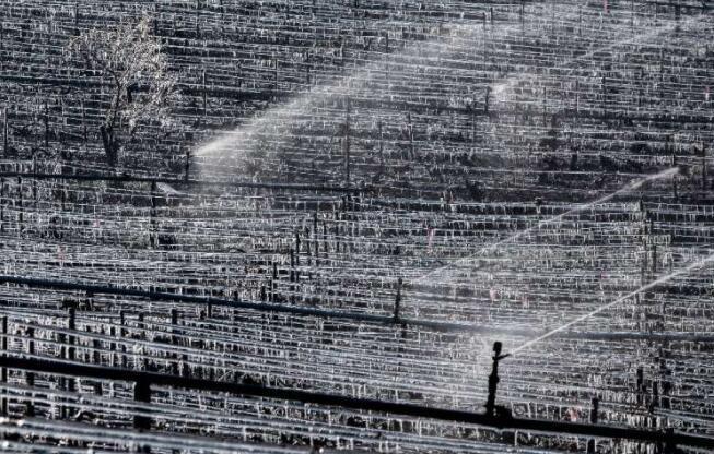 法国宣布春季霜冻农业灾难