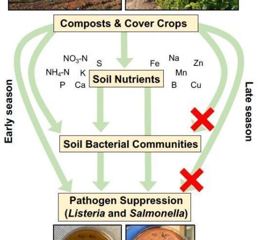 有机堆肥可帮助农民预防食源性疾病暴发