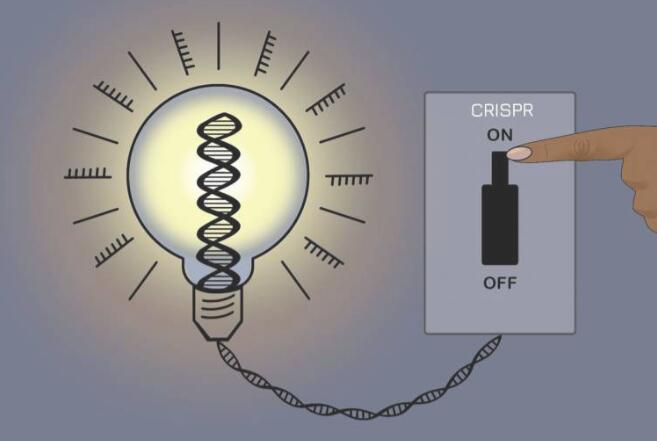 新型可逆CRISPR方法可控制基因表达且保持基础DNA序列不变