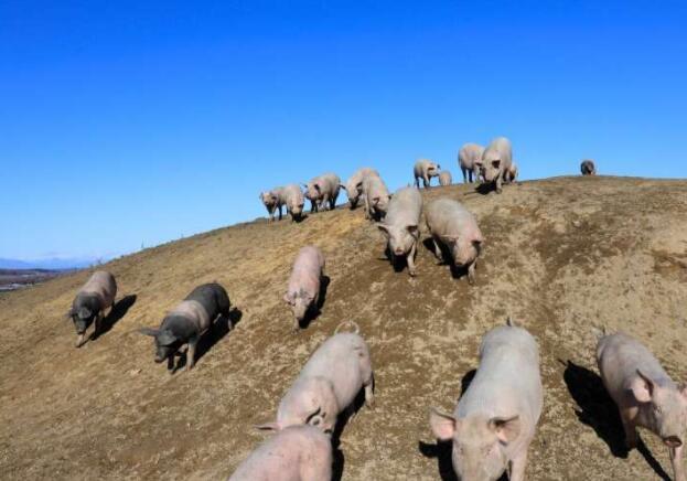 调查显示消费者更关注牲畜的基因编辑而不是蔬菜