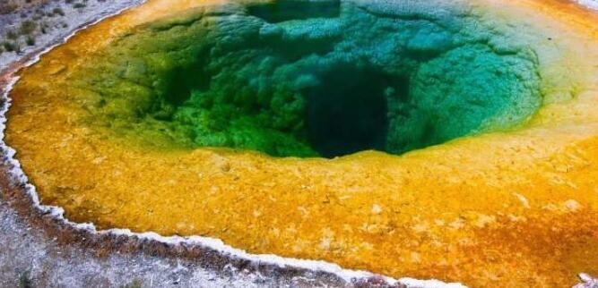 超级藻类Galdiera的前景