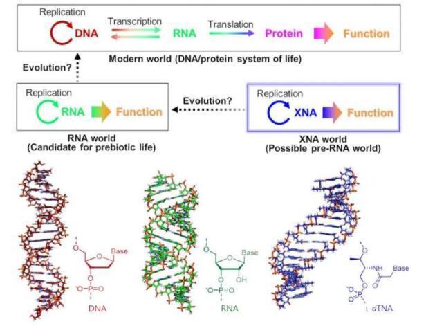 生命起源可能始于类似DNA的XNA