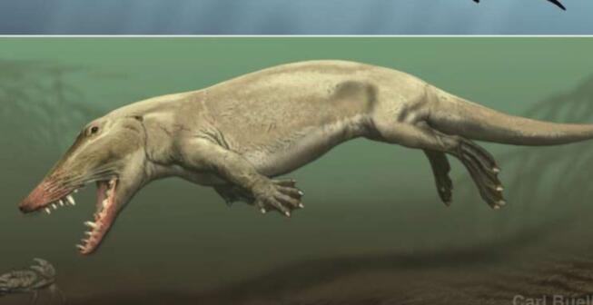 皮肤深层:鲸鱼和河马的水生皮肤适应性独立进化