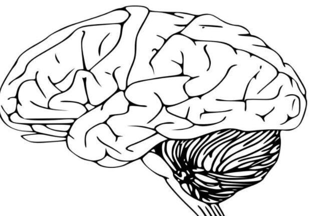 国际团队确定面部和大脑形状之间的遗传联系