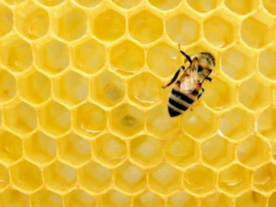 调整互动有助于加利福尼亚的一些野生蜂种群生存