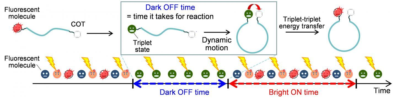 研究人员使用光稳定剂来获取原本隐藏的DNA构象动力学化学细节