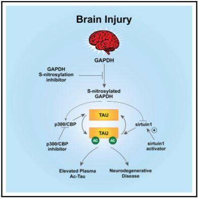 研究人员发现监测和预防TBI后神经细胞退化的新方法