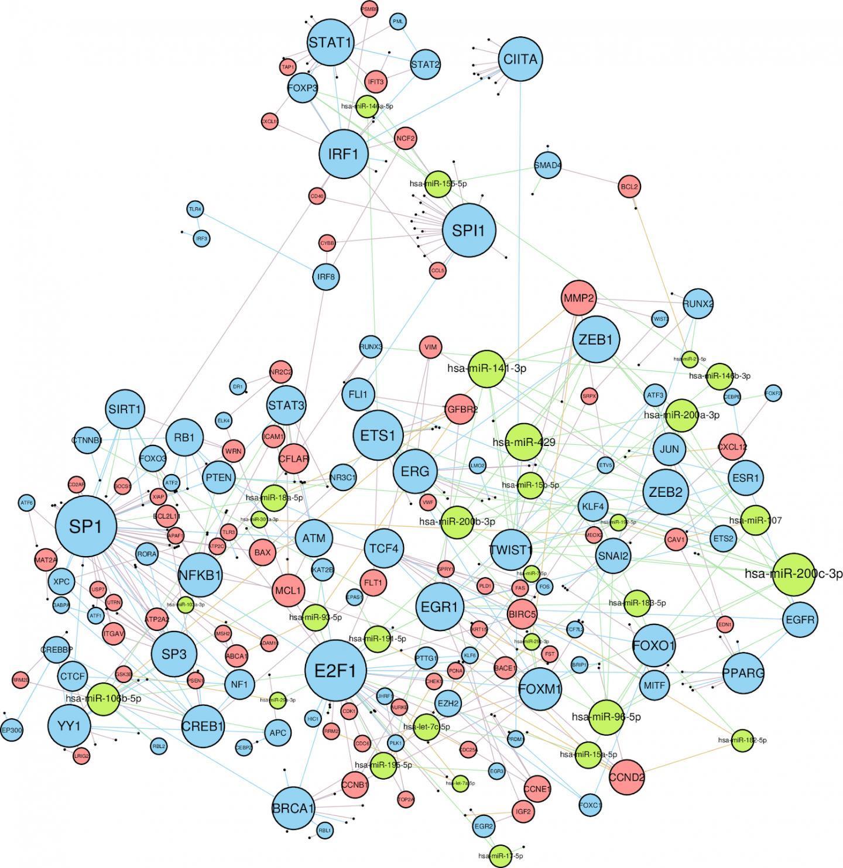 研究人员建立乳腺癌细胞内相互作用网络