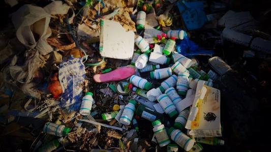 化学污染物是否正在改变野生动植物和人类的行为