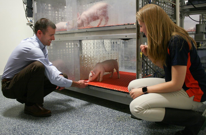 在人工饲养环境与母猪饲养环境下 猪之间的脑发育没有重大差异