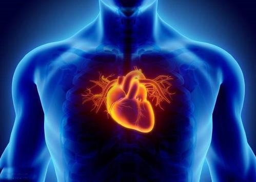 数学方法可建立合成心脏以识别心脏形状与疾病的联系