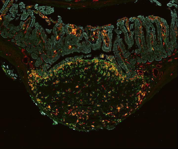 研究人员推出了新的时间机器技术来测量细胞