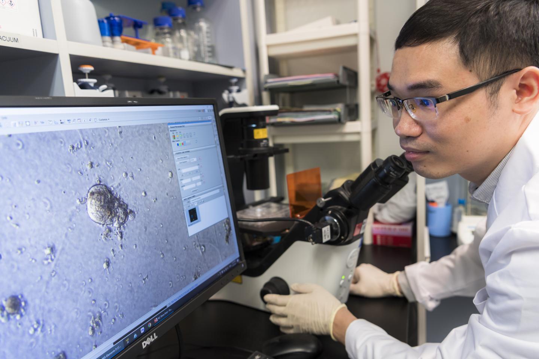 城大生物学家发现可增强乳腺癌基因的超级增强剂