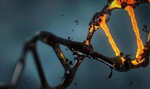 损伤敏感蛋白可以识别DNA断裂