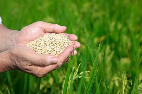 国家粮食安全的差异应该用家庭收入而不是农业来解释
