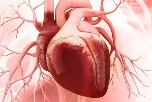 研究有助于弄清为什么孕妇会出现与老年患者相似的心力衰竭