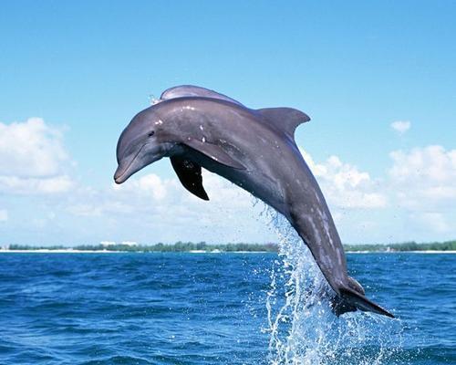 海洋动物激发了新的方法来优化结构拓扑