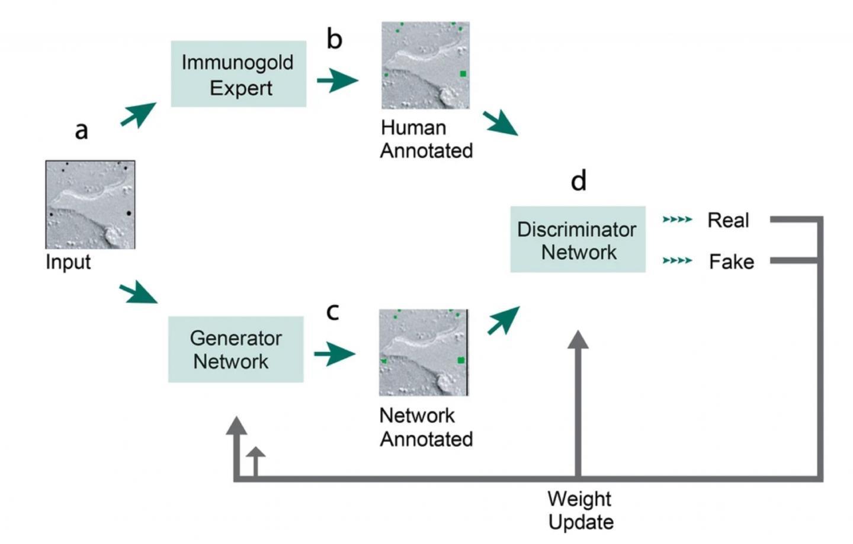 神经网络在数据科学和电子显微镜之间的系