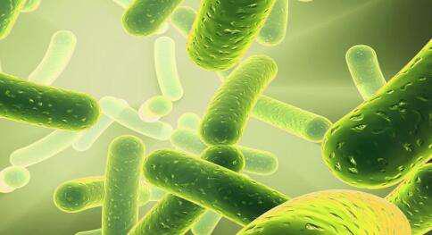 益生菌菌株可帮助孕妇保持健康的铁水平