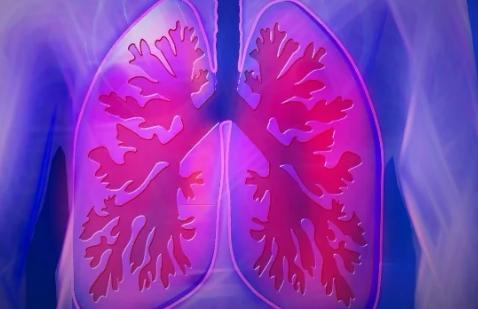 研究揭示了可能与婴儿呼吸相关疾病有关的细胞的不同类型