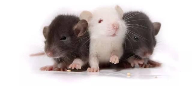小鼠研究表明控制食欲的受体是厌食症的靶标