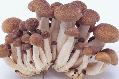 食用蘑菇的量增加与癌症的风险降低有关