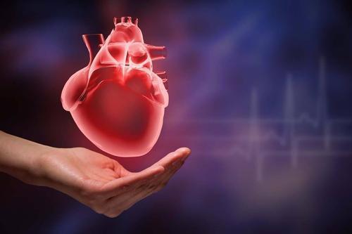 更多的腹部重量也会增加患心脏病的危险