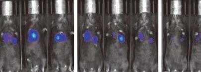 工程化T细胞以广泛攻击癌症