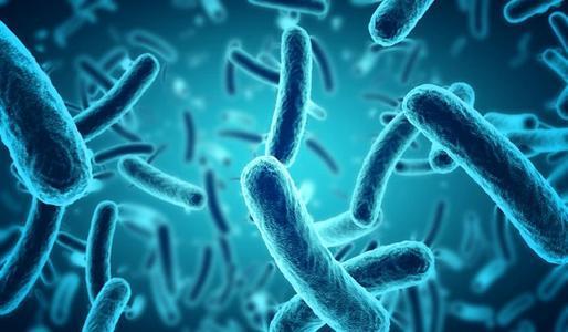 细菌DNA可以向前或向后读取