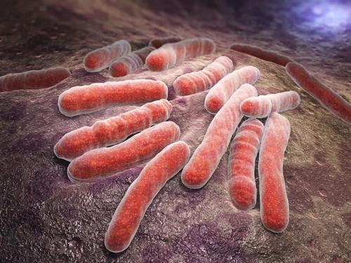 研究人员开发了一些方法来了解结核菌如何食用自己喜欢的食物